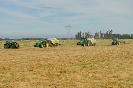 pye group staff baling
